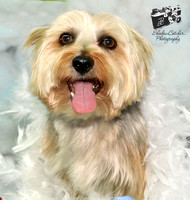 2013 Holiday Portraits at American Tails